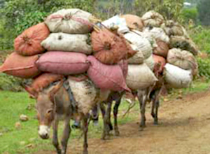 donkey-work